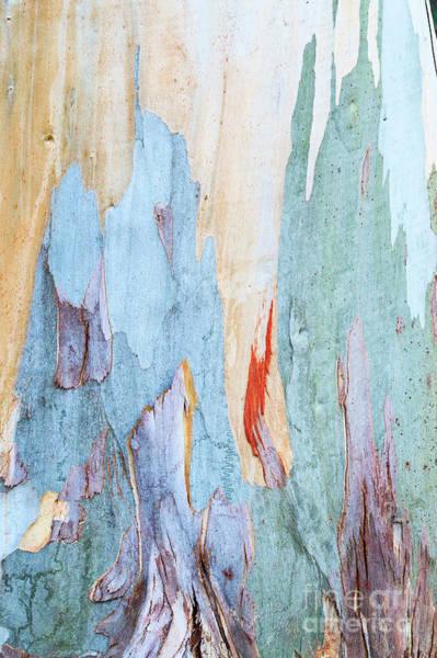 Photograph - Tingiringi Gum Tree Bark by Tim Gainey