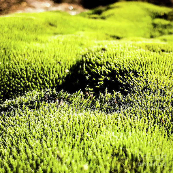 Photograph - Tiny Forest 2 by Atousa Raissyan