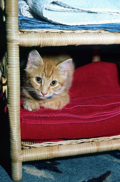 Wall Art - Photograph - Tiny Kitten by Sally Weigand