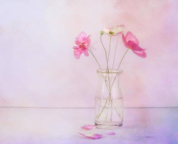 Photograph - Tiny Poppies by Theresa Tahara