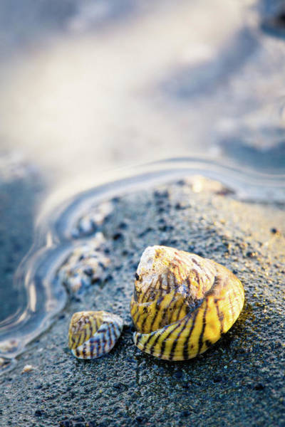 Photograph - Tiny Seashell by Nicole Young