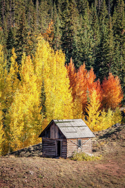 Photograph - Tiny Shelter Beside Aspens by Denise Bush