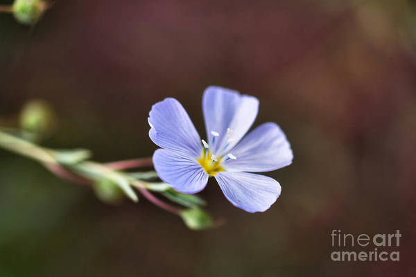 Wall Art - Photograph - Tiny Things by Jeff Swan