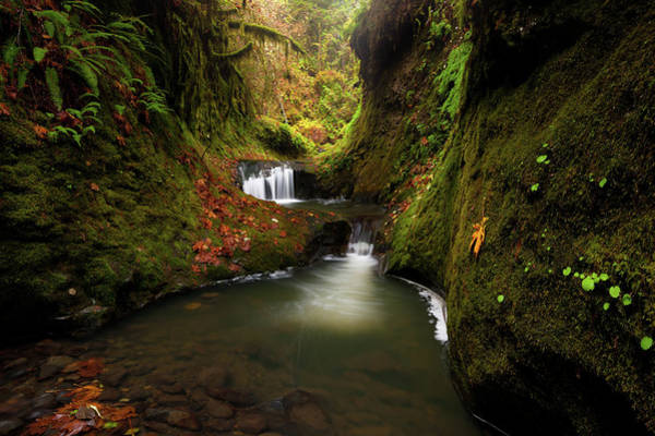 Photograph - Tire Creek Canyon by Andrew Kumler