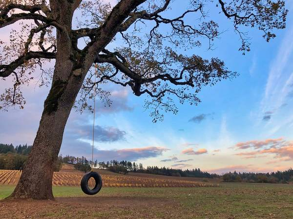 Tire Swing Tree Art Print