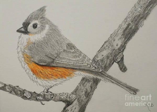 Titmouse Drawing - Titmouse Drawing by Karen Beasley