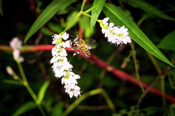 Photograph - To Bee Or Not To Bee by David Morefield