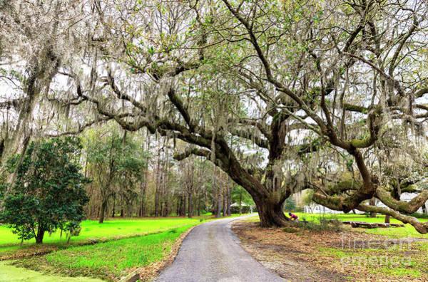 Photograph - To Magnolia Gardens Charleston by John Rizzuto
