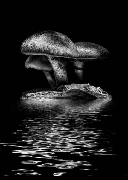 Photograph - Toadstools On A Toronto Trail Reflection 3 by Brian Carson