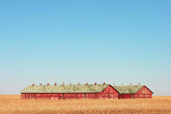 Corn Field Photograph - Tobacco Row by Todd Klassy