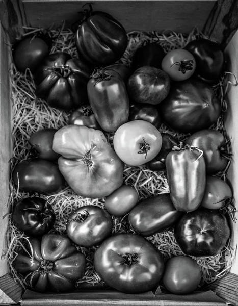 Photograph - Tomatoes At The French Market by Georgia Fowler