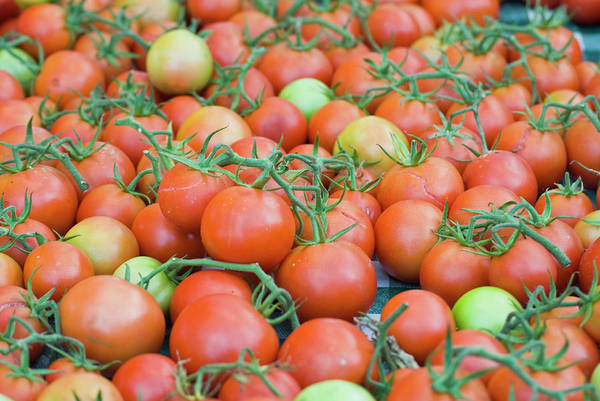 Retail Photograph - Tomatoes On The Vine by By Ken Ilio
