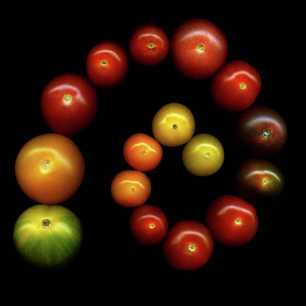 Black Background Photograph - Tomatoes by Photograph By Magda Indigo