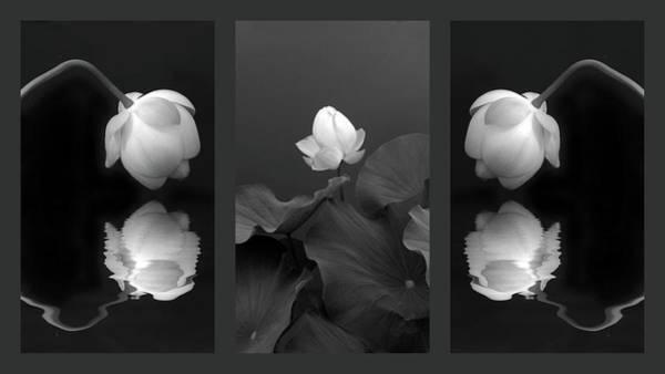 Photograph - Tonal Study Triptych by Jessica Jenney