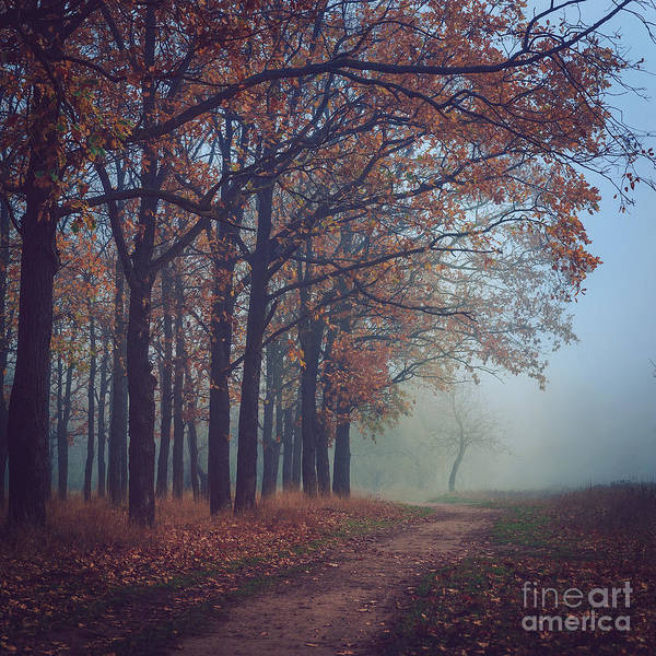Remote Photograph - Toned Picture Of Sad And Mystery Autumn by Dioniya