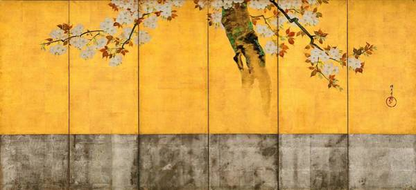Wall Art - Painting - Top Quality Art - Blossoming Cherry Trees by Sakai Hoitsu