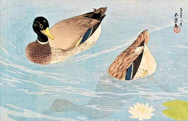 Wall Art - Painting - Top Quality Art - Duck by Hashiguchi Goyo