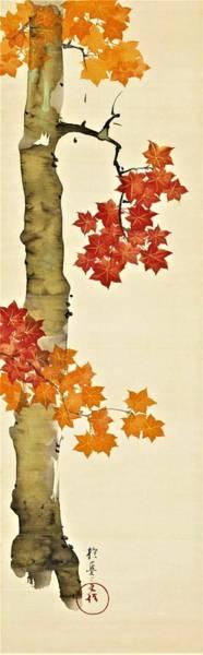 Enthusiasm Wall Art - Digital Art - Top Quality Art - Maple Tree by Sakai Hoitsu