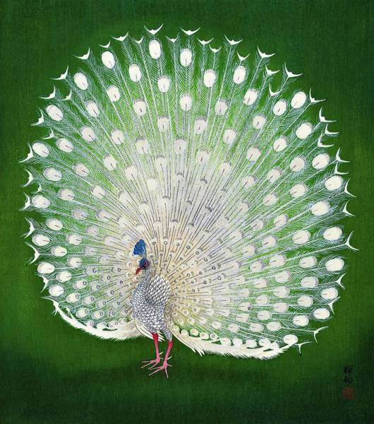 Wall Art - Painting - Top Quality Art - Peacock by Ohara Koson