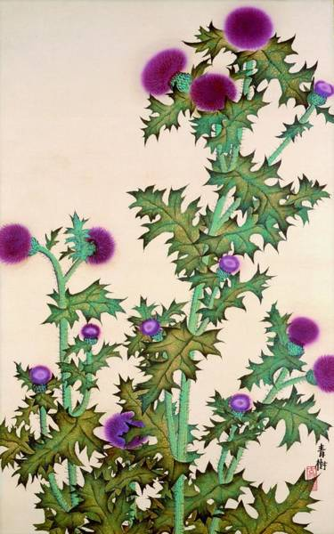 Thistle Wall Art - Painting - Top Quality Art - Thistle by Omoda Seiju