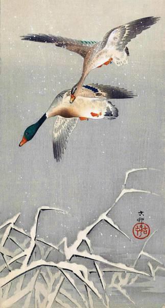 Mandarin Wall Art - Painting - Top Quality Art - Two Ducks by Ohara Koson