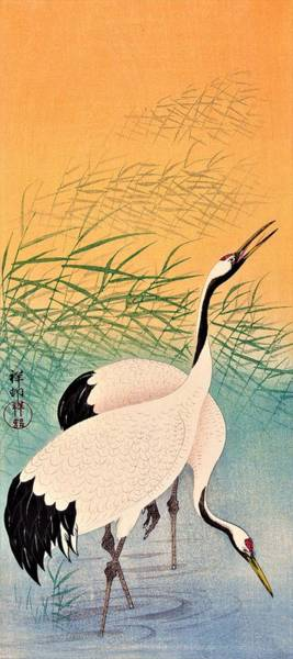 Wall Art - Painting - Top Quality Art - Two Japanese Crane by Ohara Koson