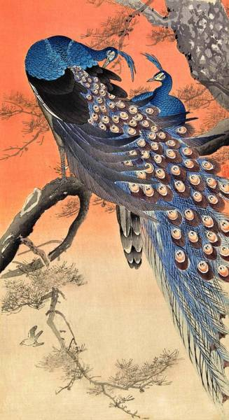 Felicitous Wall Art - Painting - Top Quality Art - Two Peacock by Ohara Koson