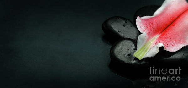 Photograph - Top View Of Spa Stones And Flower Petal Over Black Background by Jelena Jovanovic