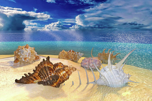 Wall Art - Digital Art - Topsail Ocean Shells by Betsy Knapp