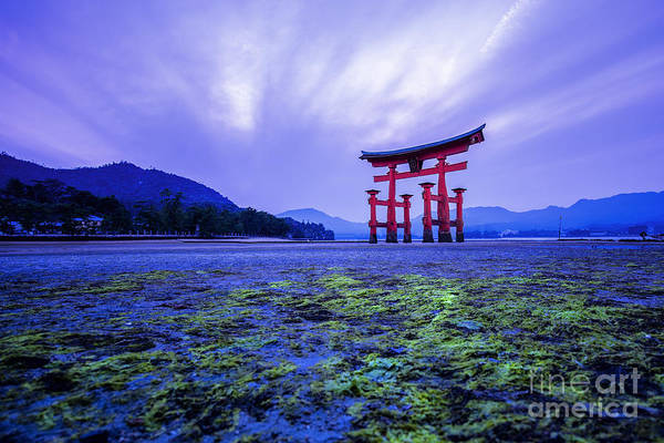 Wall Art - Photograph - Tori In Hiroshima Japan by Sahachatz