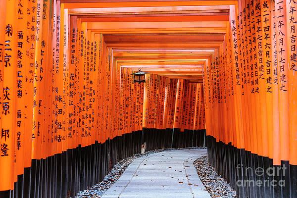 Wall Art - Photograph - Torii Gates, Fushimi Inari Shrine, Kyoto, Japan by Matteo Colombo
