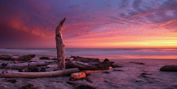 Wall Art - Photograph - Torrey Pines Beach Log And Sunset by William Dunigan