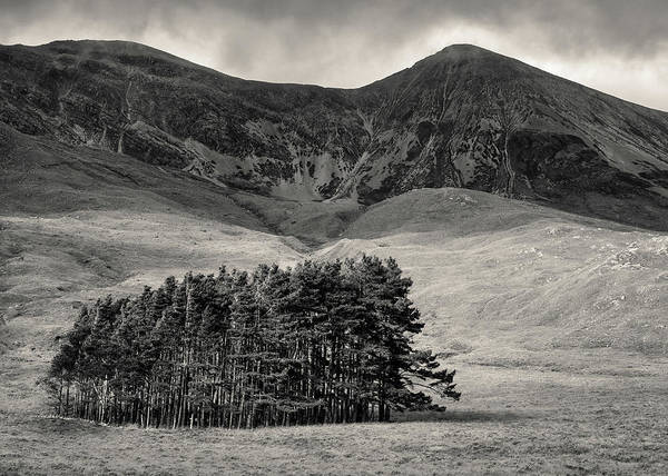 Wall Art - Photograph - Torridon Trees by Dave Bowman