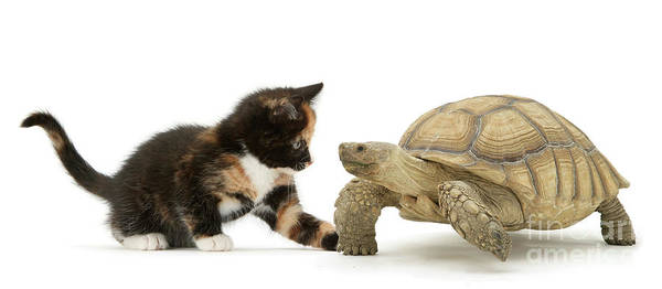 Photograph - Tortoise And Tortoiseshell by Warren Photographic