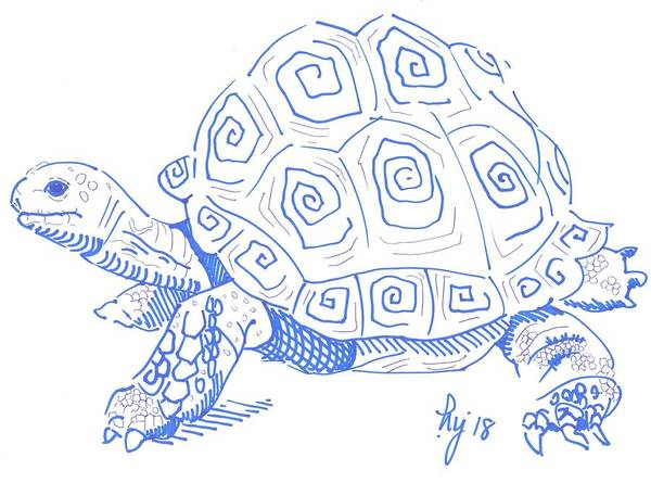 Drawing - Tortoise Drawing by Mike Jory