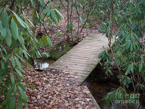Photograph - Tory's Falls Trail Bridge by Patrick M Lynch