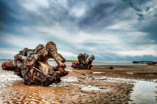 Photograph - Tossed Up On The Beach by Dee Browning