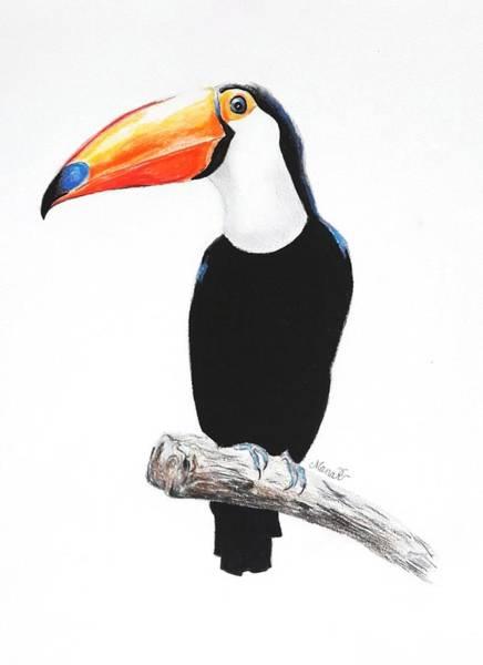 Drawing - Toucan by Manar Hawsawi