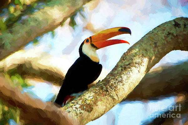 Chester Mixed Media - Toucan On A Tree by Pravine Chester