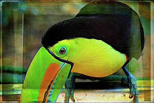Photograph - Toucan On My Shelf by Alice Gipson