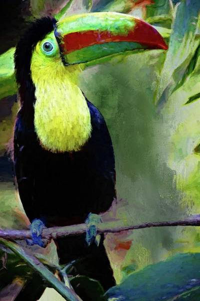 Photograph - Toucan Portrait by Alice Gipson