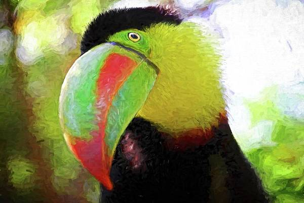 Photograph - Toucan Stare by Alice Gipson