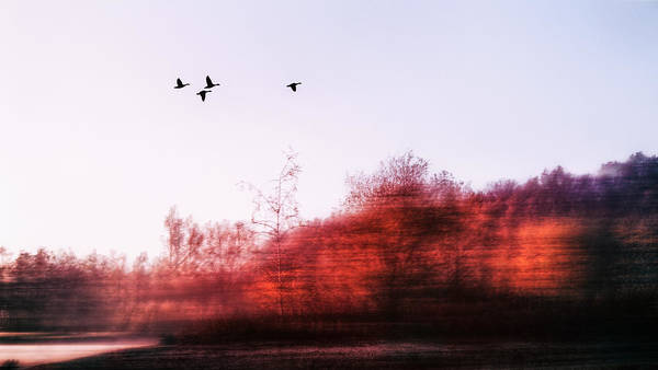 Photograph - Touch Of Nature by Jaroslav Buna