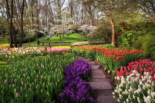 Photograph - Touch Of Purple And Red. Keukenhof Botanic Garden by Jenny Rainbow