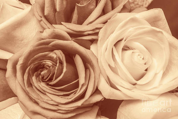 Rose Bud Photograph - Touching Harmony by Jorgo Photography - Wall Art Gallery