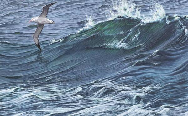Painting - Touching The Waves - Seabird Painting By Alan M Hunt by Alan M Hunt