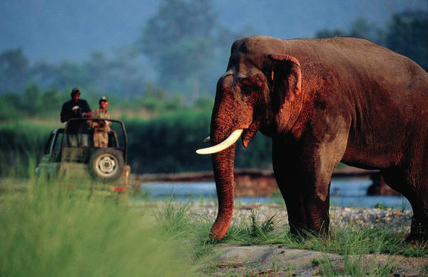Watching Photograph - Tourist In Jeep Watching A Large Tusked by Hira Punjabi
