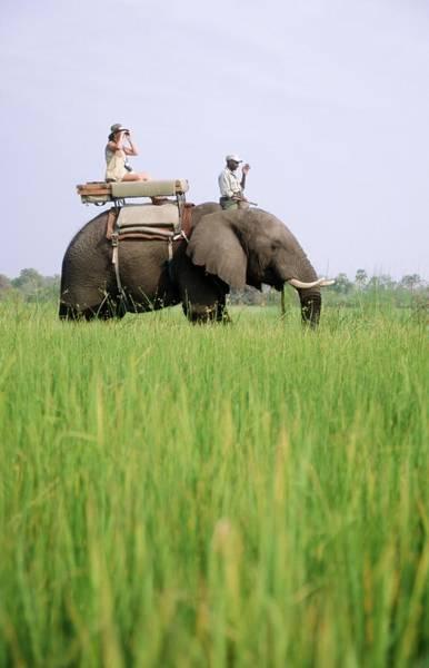 Binoculars Photograph - Tourist On An Elephant Loxodonta by Travel Ink