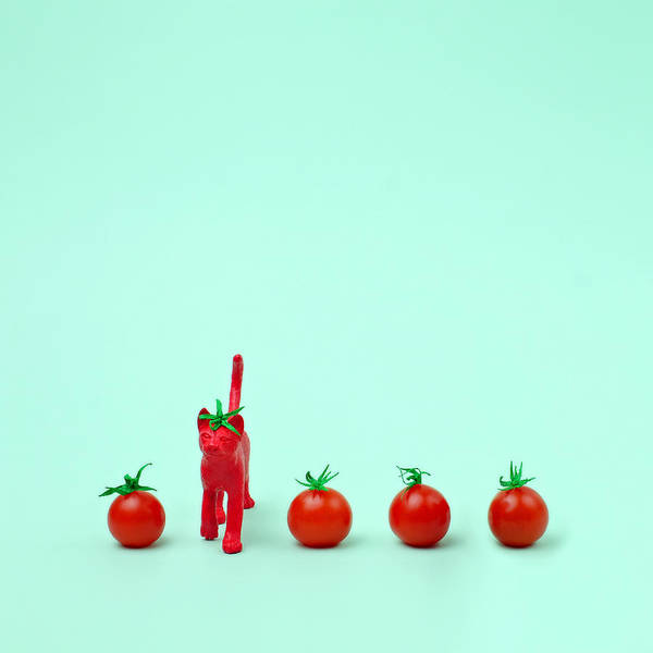 Wall Art - Photograph - Toy Cat Painted Like A Tomato In Row by Juj Winn