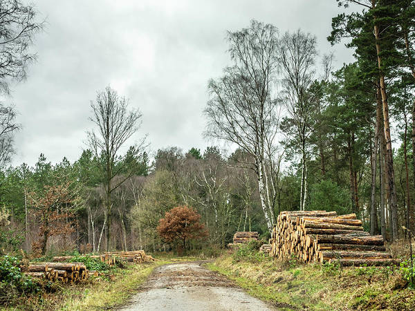 Photograph - Track Through The Wood by Nick Bywater